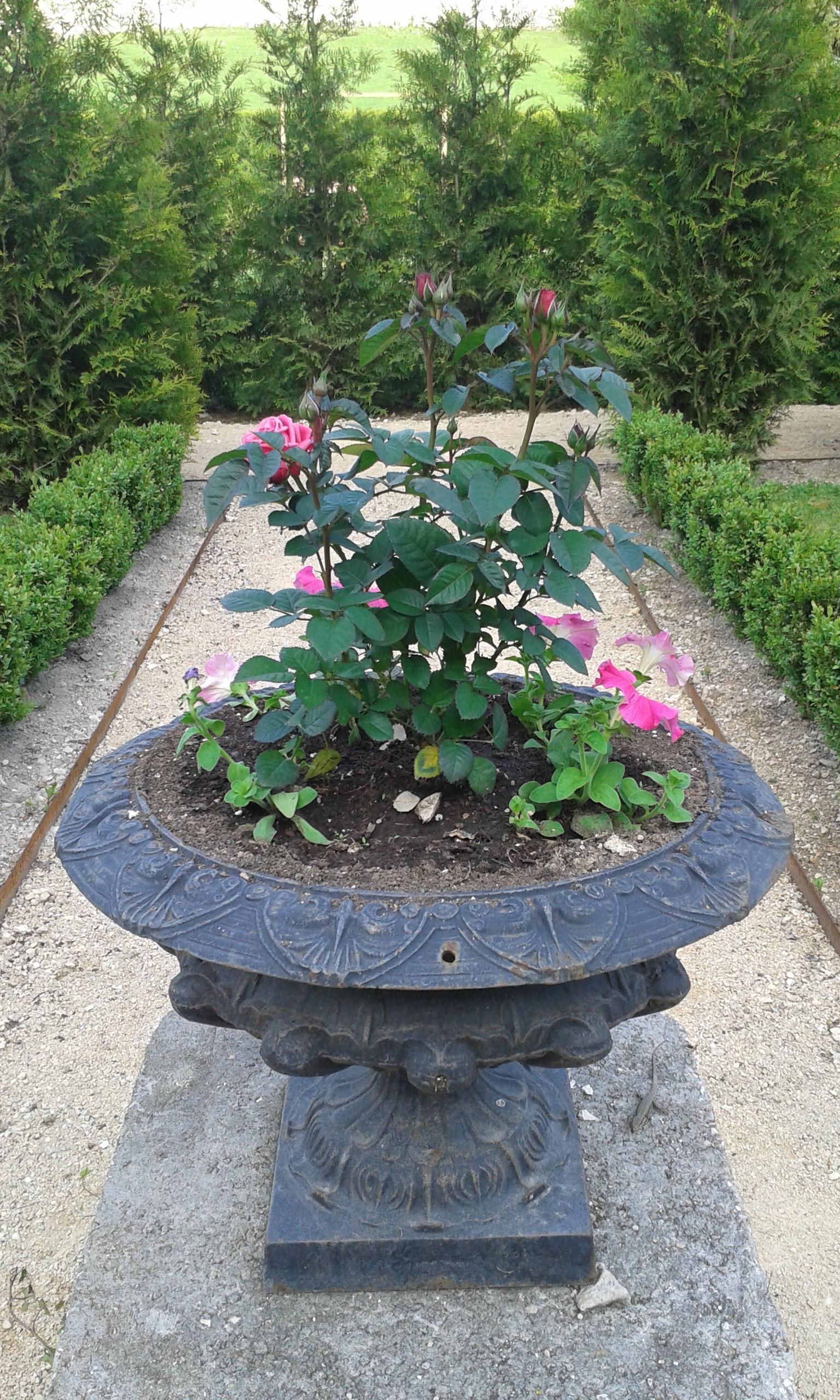 Dans le jardin-cloître - Association de Sauvegarde de l''abbaye du Val des Choues © Inès Monot