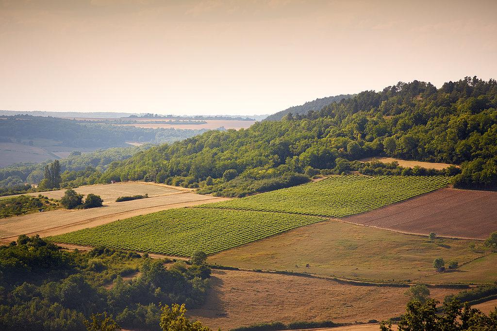 Nos vignes - Coteaux de l''Auxois - Simonnet-Febvre