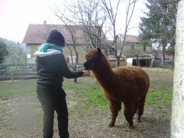 ©Les lamas d\'Anny