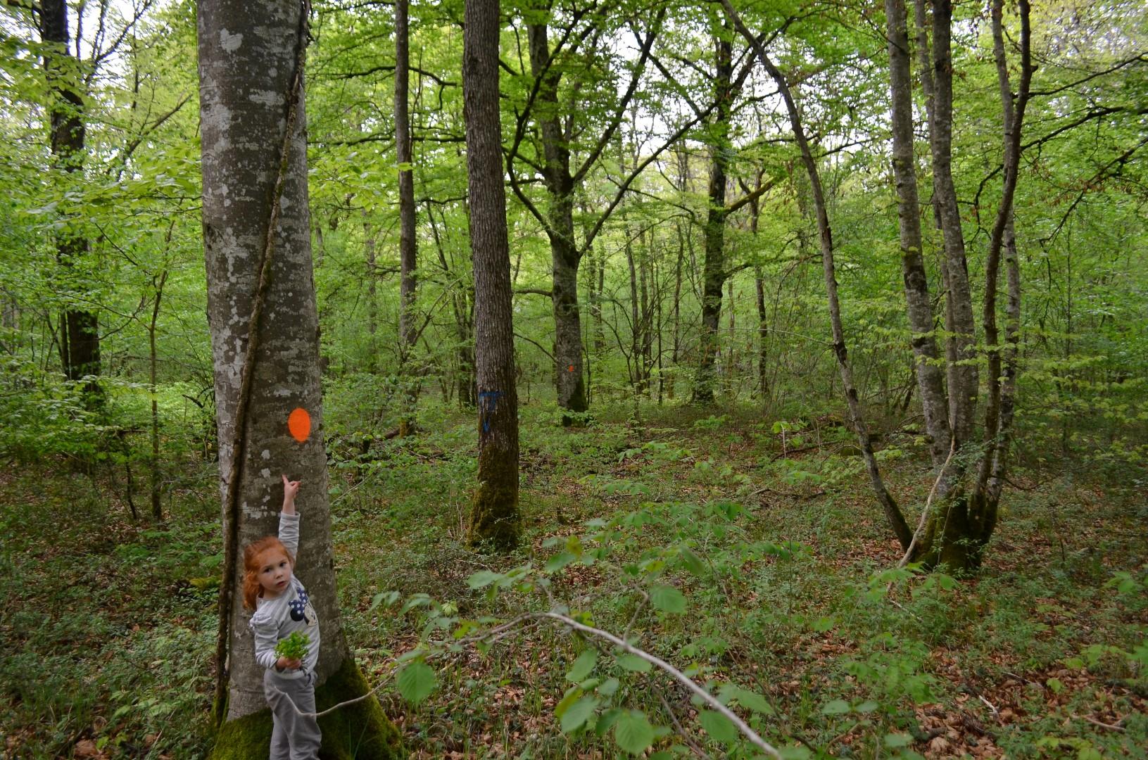 Balade en forêt - Sylvain BOULANGEOT