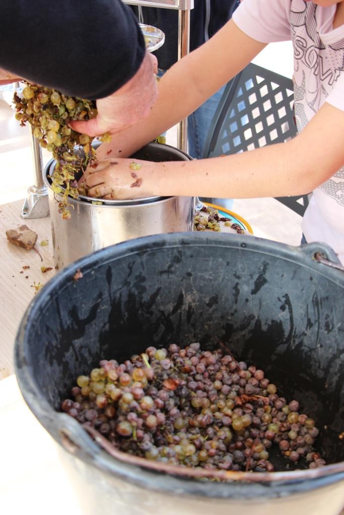 Pressée de raisins © Grand Site de Solutré